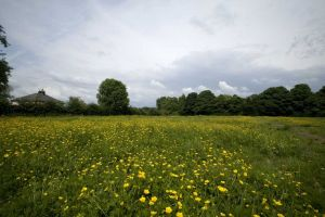 A Buttercup Heaven, its hard to believe that beneath this carpet of Buttercups lie, 2861 people, June 2008