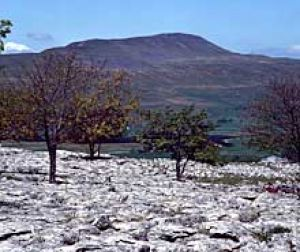 Whernside Ingleborough
